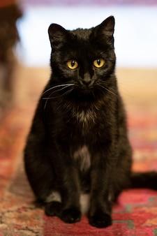 Schattige zwarte kat op het tapijt