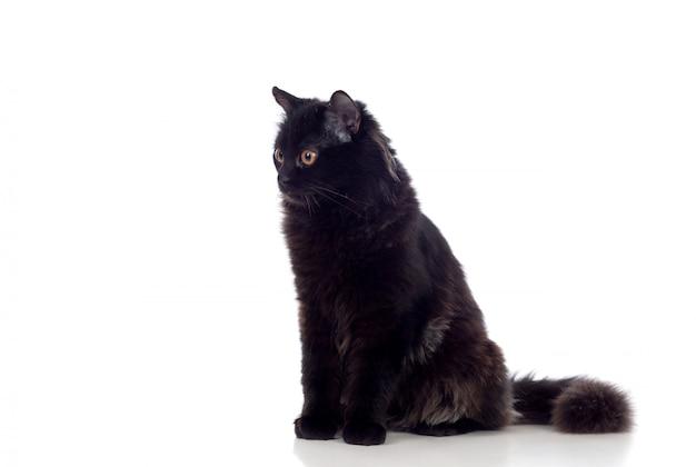 Schattige zwarte perzische kat
