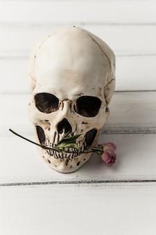 Schedel met roze bloem