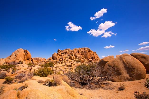 Schedelrots in joshua-boom nationaal park mohave california
