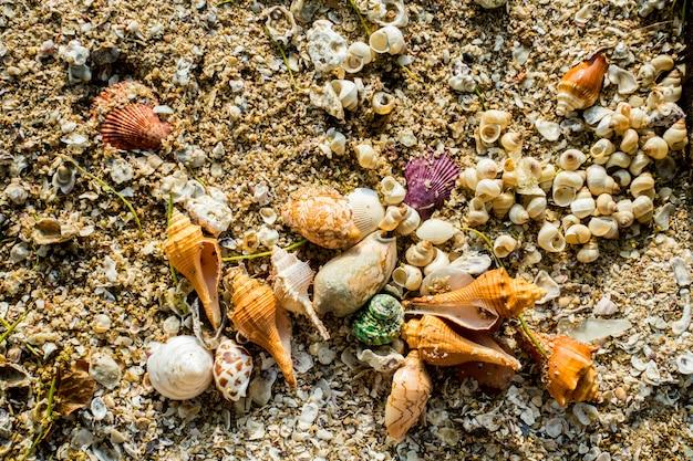 Schelpdieren op het zand en zeewater bird eye view op het strand en glas, de achtergrond schelpdieren en zeewater