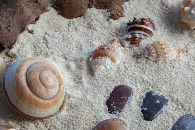 Schelpen, drijfhout en stenen in zacht zand