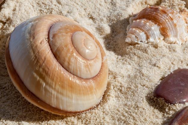 Schelpen en stenen in zacht zand