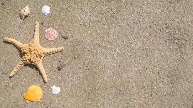 Schelpen en zeester op een zand., bovenaanzicht