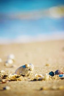 Schelpen en zeesterren op de zee. zomer foto.