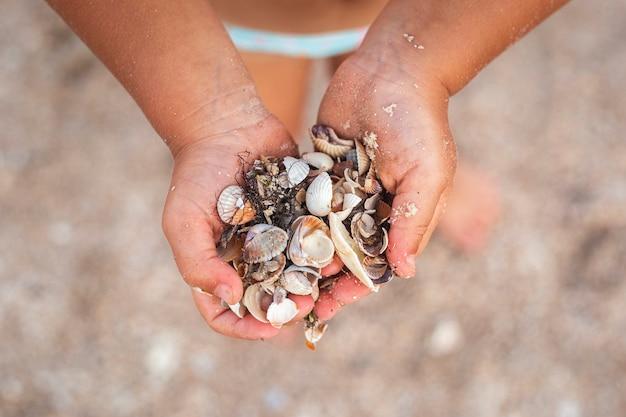 Schelpen in de handen van een kind op het strand. bovenaanzicht, plat gelegd.
