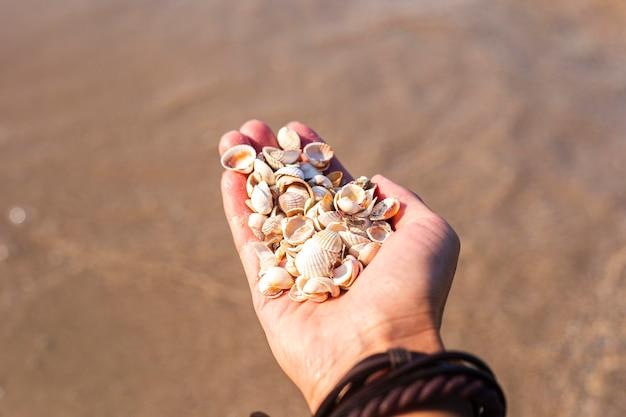Schelpen in een vrouwelijke palm op de achtergrond van de zee.