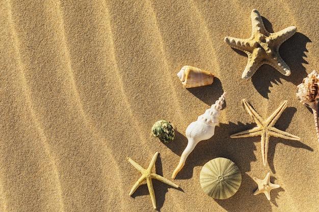 Schelpen in het zand met kopie ruimte bovenaanzicht
