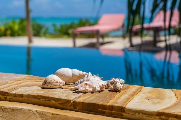 Schelpen naast het zwembad op een tropisch strand op het eiland zanzibar