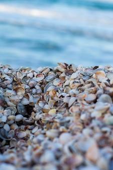 Schelpen op de wal. zee en schelpen. zeeschelpen op achtergrond zee.