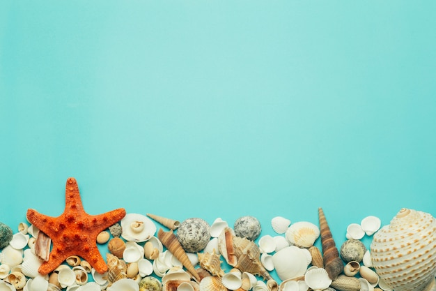 Schelpen op een blauwe achtergrond. rust, ontspanning, zee, oceaan, zomerconcept.