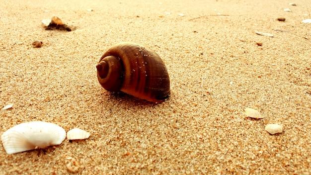 Schelpen op een strandachtergrond