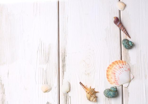 Schelpen op een witte houten achtergrond