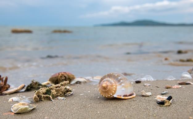 Schelpen op het strand met zee en lucht.