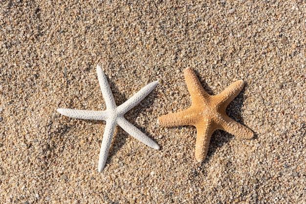 Schelpen op het zand aan zee op een warme zonnige dag