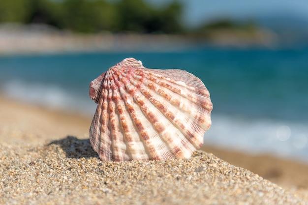 Schelpen op het zand bij de zee op een warme zonnige dag