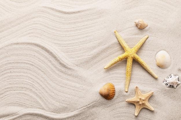 Schelpen op het zand met de zomerachtergrond van de exemplaarruimte