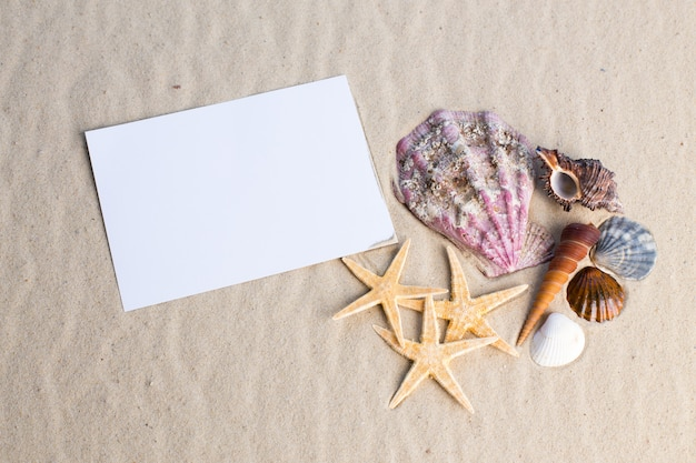 Schelpen, seastars en een lege ansichtkaart