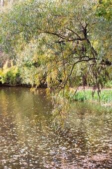 Scheve wilgentakken over de rivier