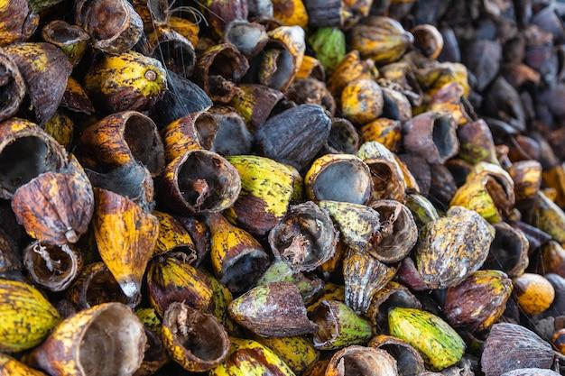 Schil van cacaofruit en cacaoschil droog