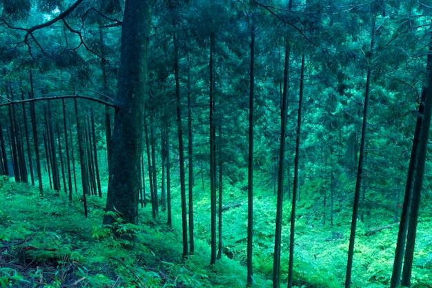Schilderachtig bergbos in japan tegen de schemering