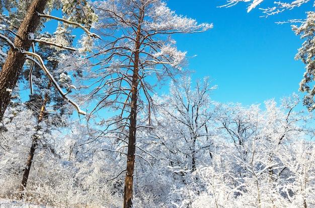 Schilderachtig besneeuwd bos in de winter.
