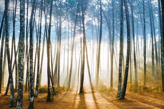 Schilderachtig bos met zonnestralen schijnt door bomen.