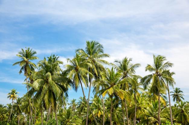 Schilderachtig tropisch oerwoudbos, ceylon-aard. sri lanka landschap