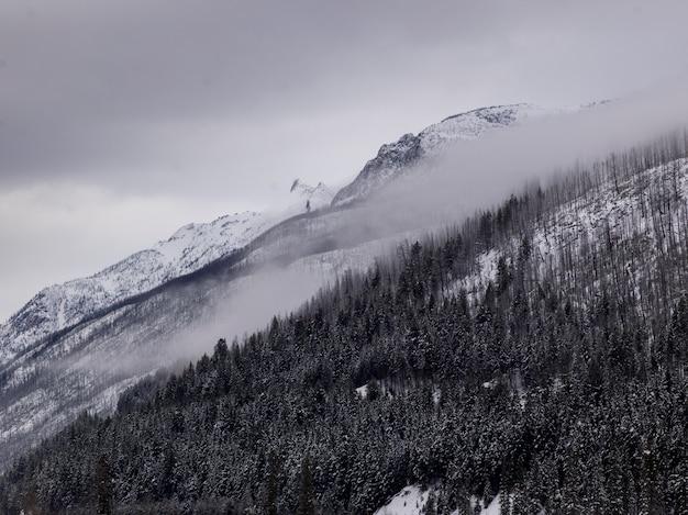 Schilderachtig uitzicht op bomen op met sneeuw bedekte bergen, regionaal district van fraser-fort george, highway 16,