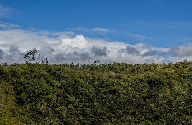 Schilderachtig uitzicht op een prachtig bos op een bewolkte dag