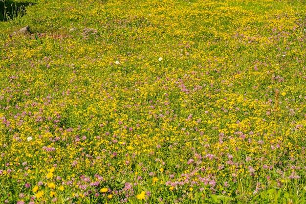 Schilderachtige alpen met een klein en kleurrijk veld met wilde bloemen