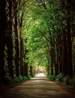 Schilderachtige asfaltweg door dicht bos en groene bomen