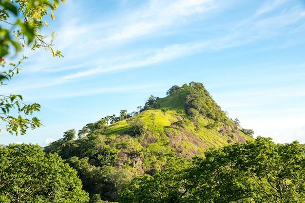 Schilderachtige groene theebergen, ceylon. landschap van sri lanka