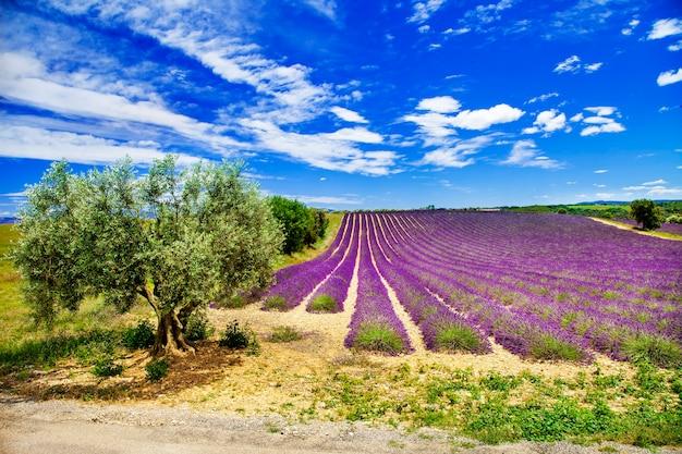Schilderachtige landschappen van de provence met bloeiende lavendel.