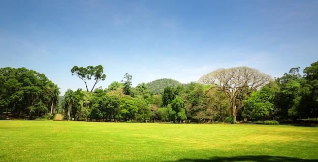 Schilderachtige natuur en blauwe lucht, ceylon. landschap van sri lanka