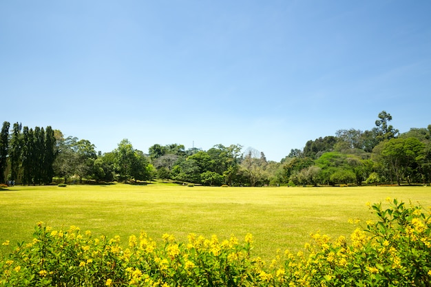 Schilderachtige natuur en blauwe lucht, ceylon