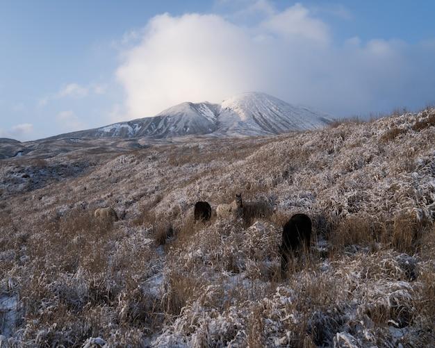Schilderachtige opname van de top van de alpen met spelende honden op het veld