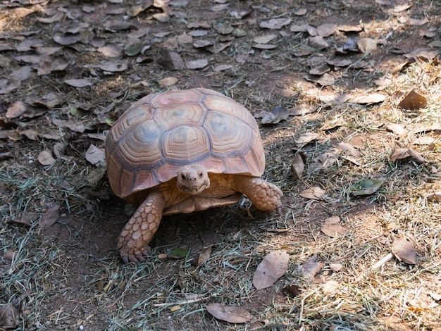Schildpad in de kooi in de dierentuin