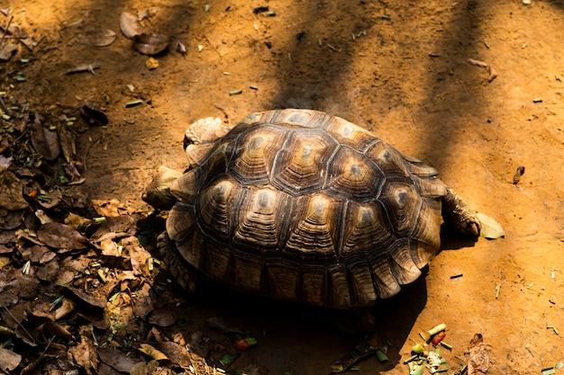 Schildpad kruipt op de grond