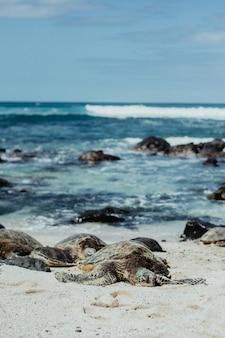 Schildpadden die op het strand rusten