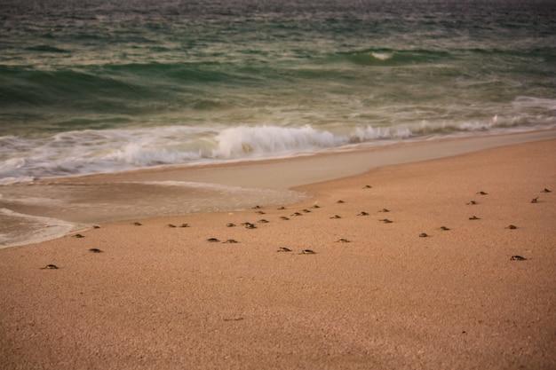 Schildpadden op het strand van ras al jinz in oman