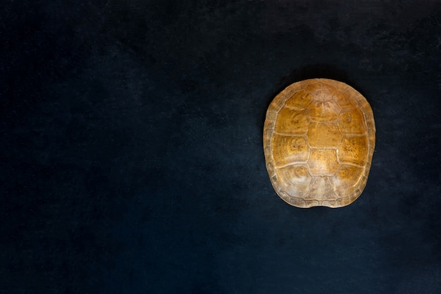 Schildpadshell ligt op zwarte achtergrond. bovenaanzicht