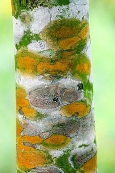 Schimmels plantenziekten op de schors van bomen waardoor de boom langzaam groeit