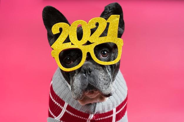 Schitterende franse bulldog hond met feestelijke bril 2021.