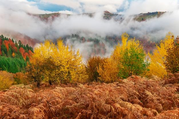 Schitterende mistige heuvel met kleurrijke naaldbomen