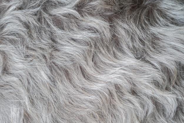Schnauzer hondenhaar