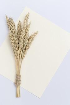 Schoof van tarwe oren close-up op set zeil champagne kleur natuurlijke graan plant, oogsttijd concept.
