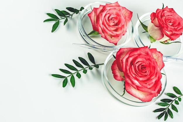 Schoonheid achtergrond make-up cosmetisch product, met groen blad en roze roos in een petrischaal. biologisch natuurlijk cosmetisch concept. zachte selectieve focus...
