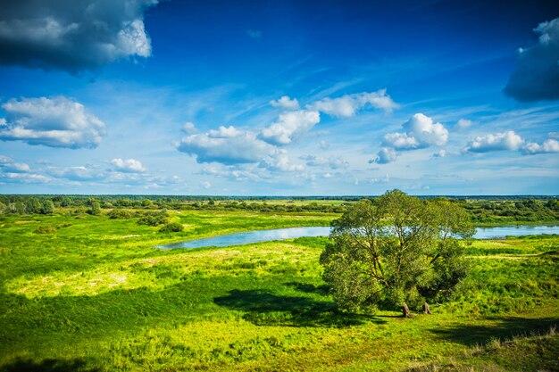 Schoonheid in de natuur uitzicht op groen veld met enkele boom en vijver