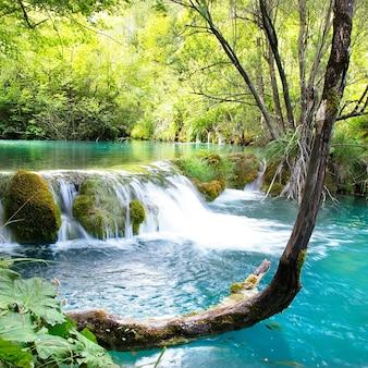 Schoonheid in natuurlandschap